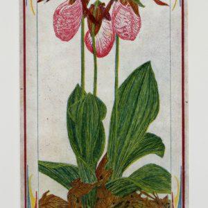 Plant Portraits / Borders
